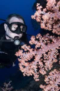 Photo of  diver and pink soft coral